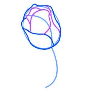 dessiner une rose rouge - etape 3