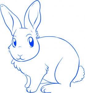 comment dessiner un lapin - etape 5