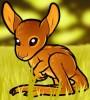 dessin de kangourou termine