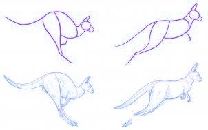 dessiner un kangourou adulte - etape 1