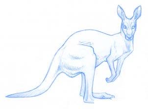 Comment dessiner un kangourou adulte allodessin - Kangourou dessin ...