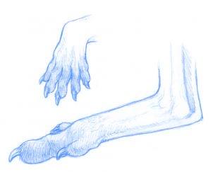 dessiner un kangourou adulte - etape 2