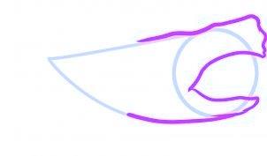 dessiner un requin - etape 2