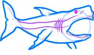 dessiner un requin - etape 4