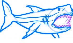 dessiner un requin - etape 5