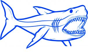Comment dessiner requin for Comment dessiner un requin marteau