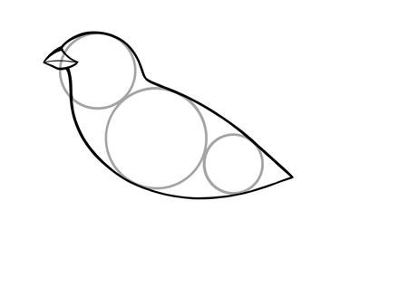dessiner un oiseau type moineau - etape 2