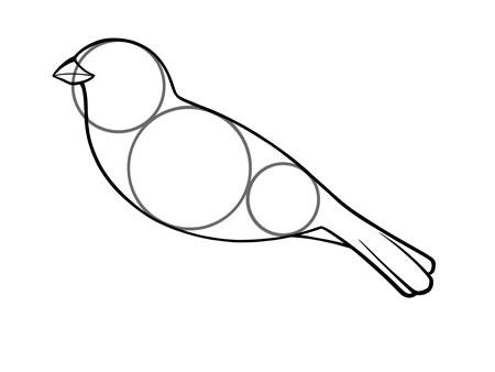 dessiner un oiseau type moineau - etape 3