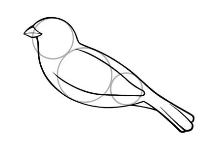 dessiner un oiseau type moineau - etape 4