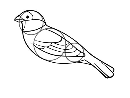 dessiner un oiseau type moineau - etape 5