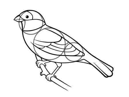 dessiner un oiseau type moineau - etape 6