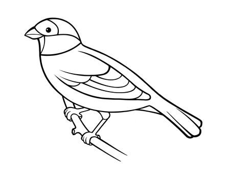 dessiner un oiseau type moineau - etape 7