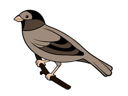 dessiner un oiseau type moineau - etape 8