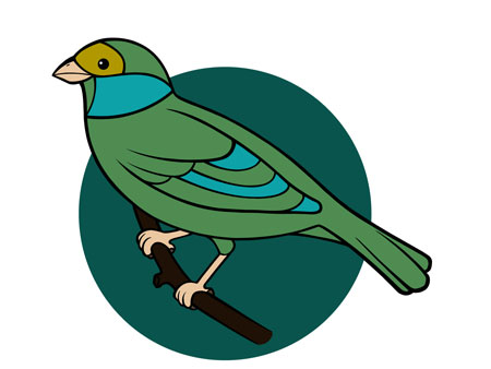 dessiner un oiseau type moineau - etape 9