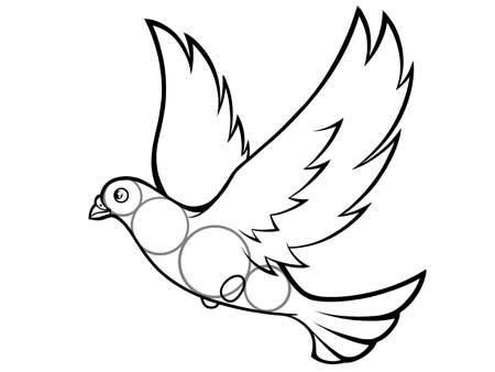 dessiner un oiseau type Colombe - etape 6