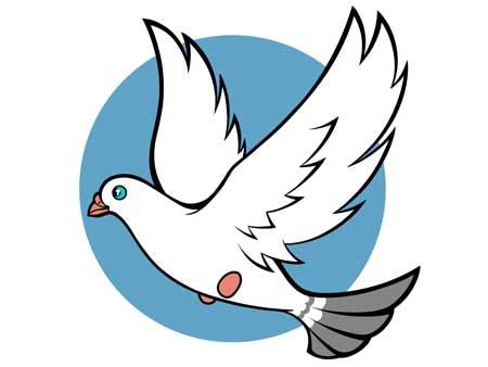 dessiner un oiseau type Colombe - etape 8